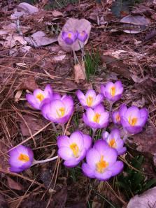 Woodlands flowers